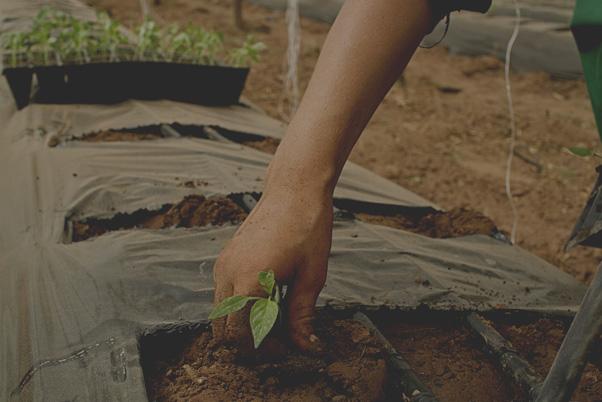 Boletín # 0: Biocanto: Un canto a la vida y a la naturaleza