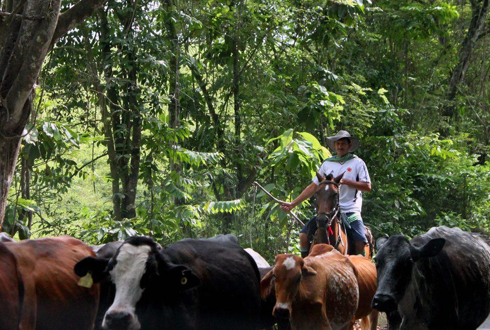 Boletin #7: El Catatumbo es su gente